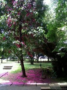 Bogor-Barat-20130408-00314.jpg
